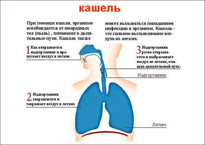 сильный кашель у ребенка Причины, почему человек кашляет