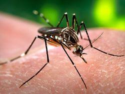 от комаров для детей